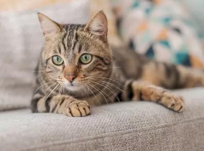 Гнойные глаза у кошки - причины и лечение