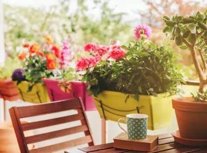 Выносливые цветы для балкона - 5 самых красивых сортов