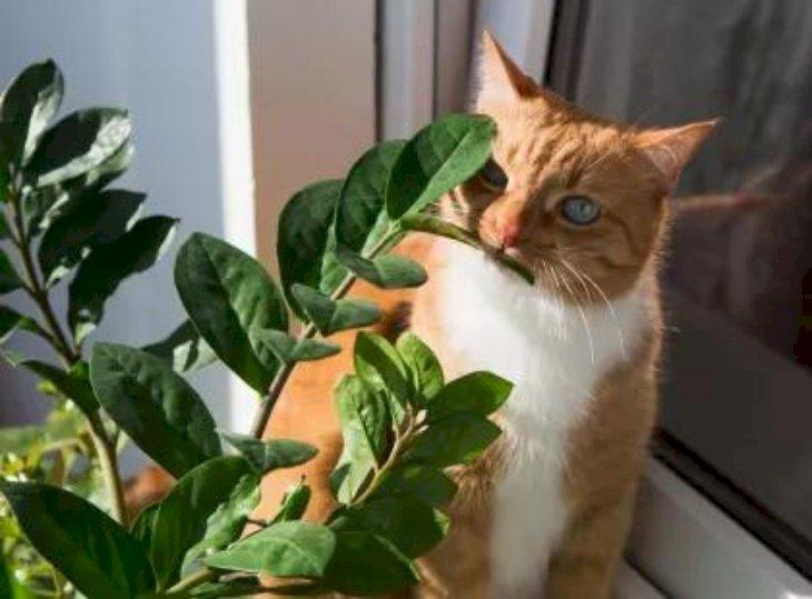 Ядовитые и безопасные для кошек растения - список