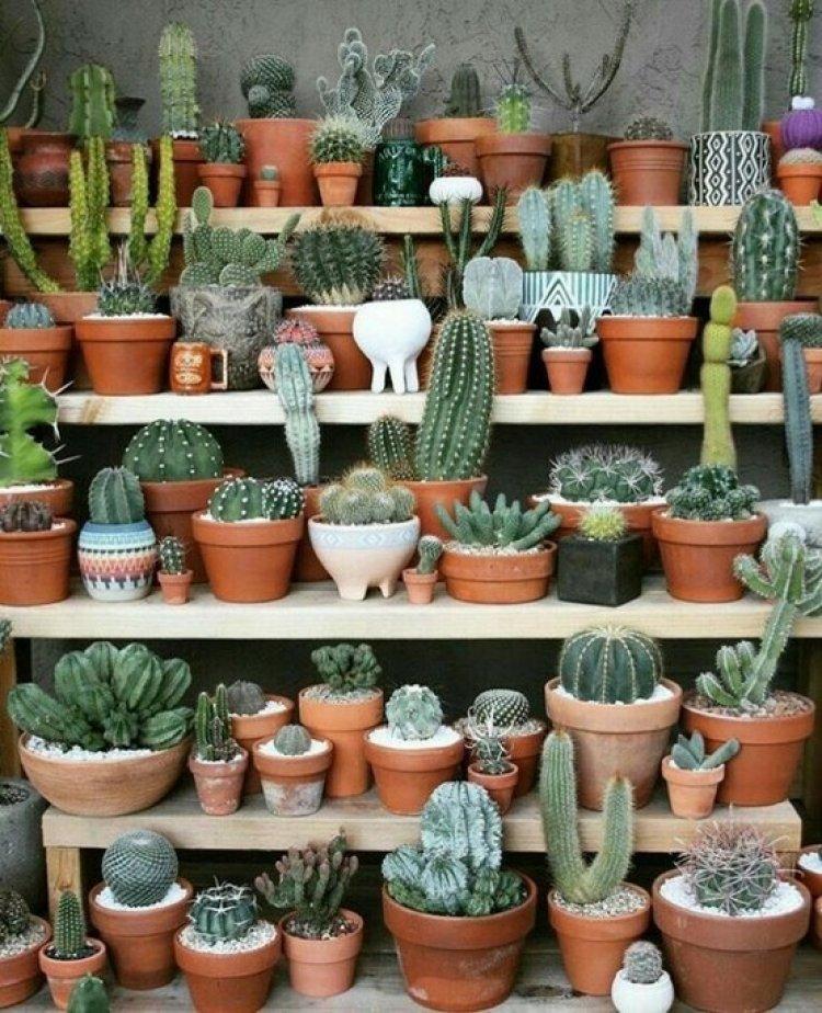 Горшки для кактусов – какие выбрать?
